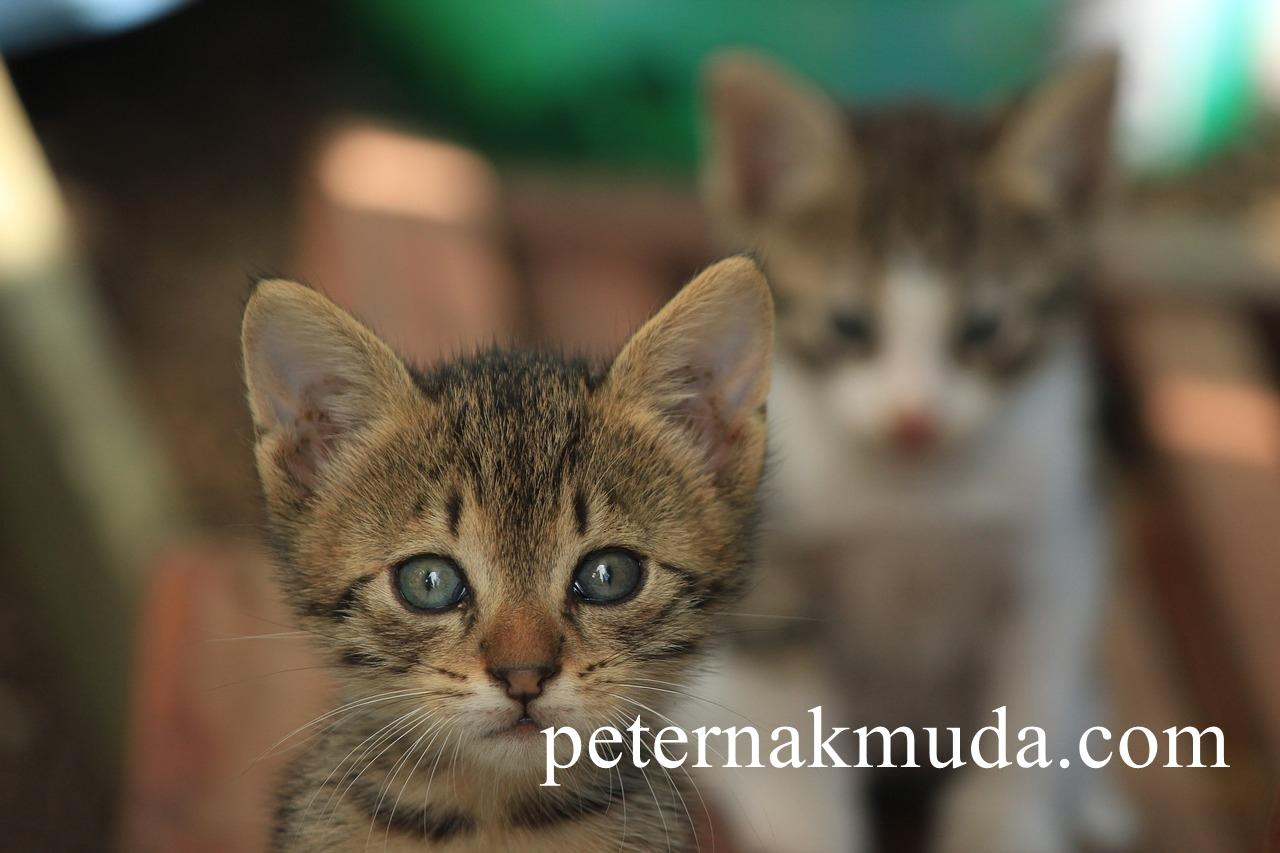Sejarah Kucing Dan Anjing Dalam Islam Inilah 43