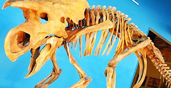 Dinossauro bonitinho de estimação - Dino-Pôney pode ser uma nova espécie