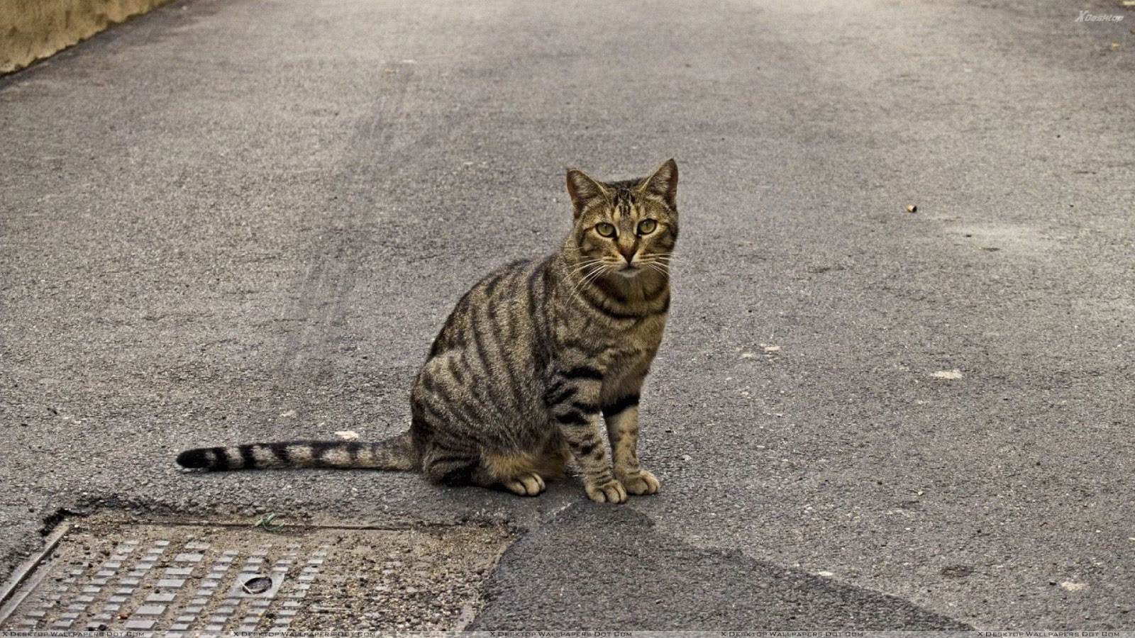 Pertanda Mau Nabrak Kucing ~ Info Terkini