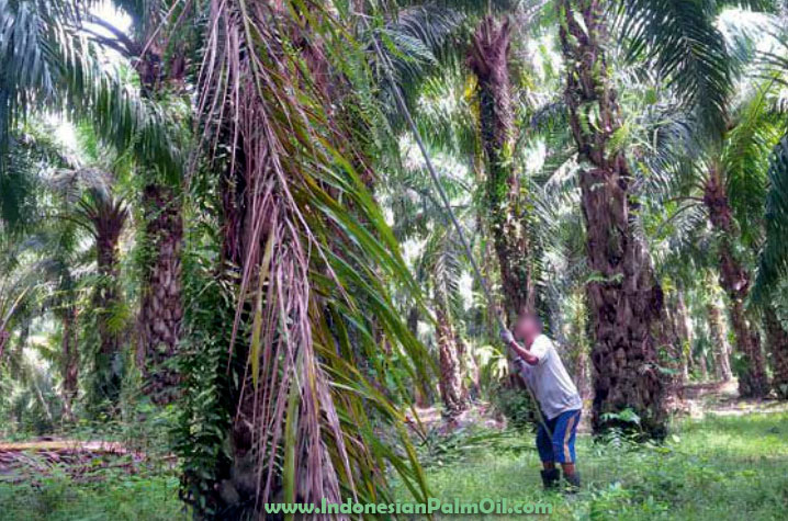 use of certified sustainable palm oil