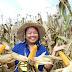 """""""เกษตรกรพึ่งตน ข้าวโพดยั่งยืน"""" ช่วยเกษตรกรปลูกข้าวโพดยั่งยืน หยุดบุกรุกป่าลาหมอกควัน"""