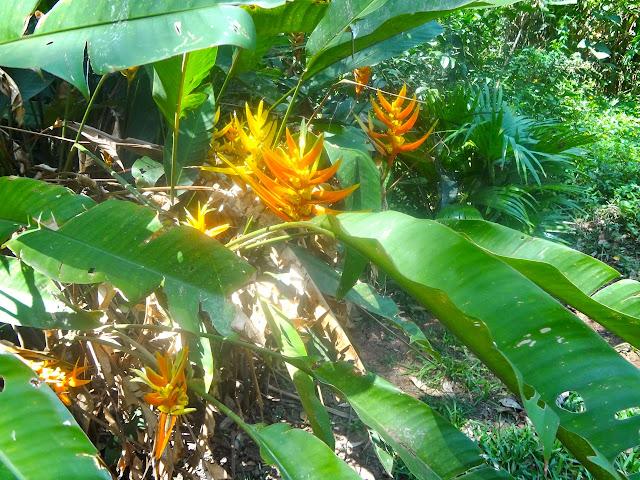 Parque da Aclimação flor