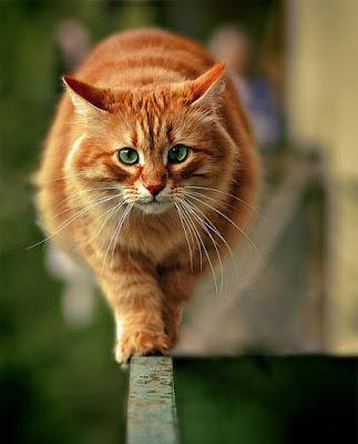 Cute Cats Kitty Pets 14