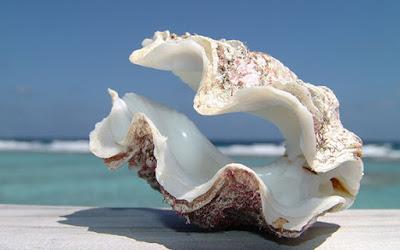 خلفيات طبيعية hd محارة البحر