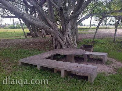 tempat duduk di bawah pohon