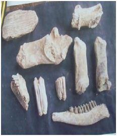 Mengenal Jenis Manusia Purba Meganthropus, Pithecanthropus Erectus-Robustus, Homo Sapiens, Manusia Wajak dan Manusia Liang Bua dari Situs Trinil
