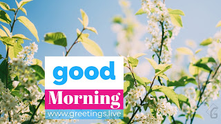 Good-morning-small-white-flowers-green-leaf-HD
