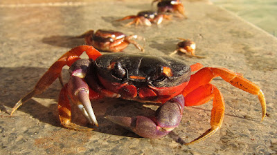 Young Crab and His Mother Moral Story