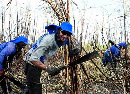 Sine-PB de Cajazeiras oferece mais 105 empregos para o setor da cana-de-açúcar