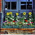 5 Colorful Gardening Ideas for Window Boxes