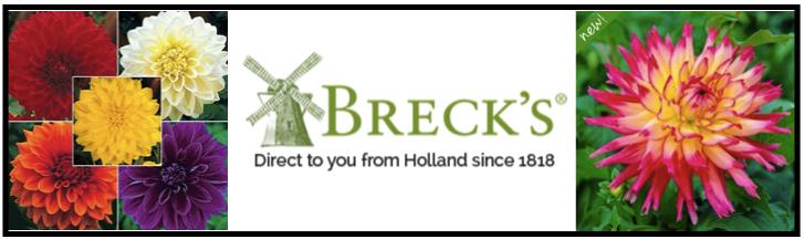 Across the Avenue: DIY: Brighten Your Garden with Breck\'s ...