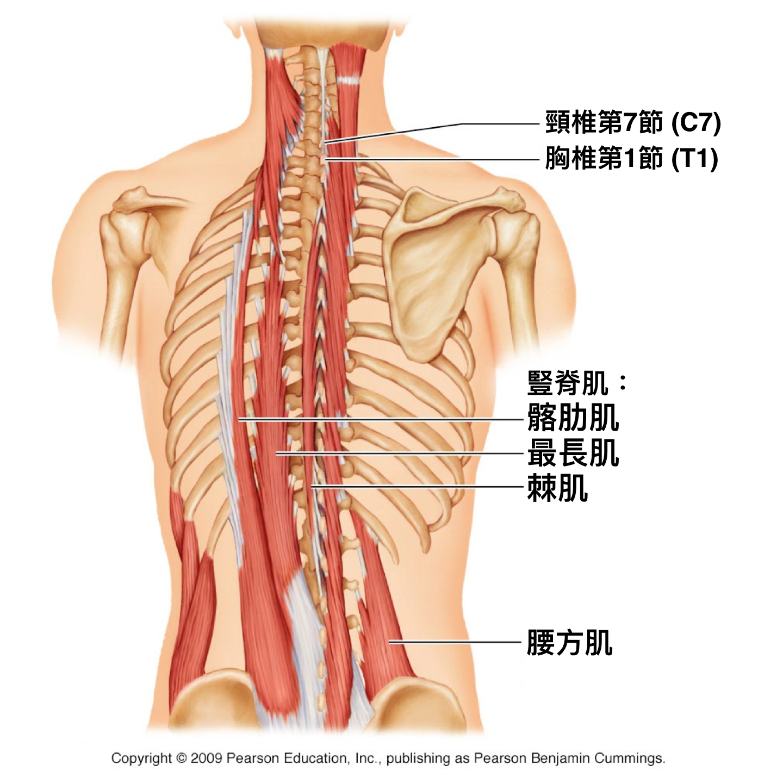 痛 激痛 排卵 左下腹部の痛みは排卵痛の可能性があります。排卵痛とは?
