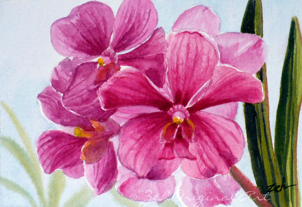 Janet zeh original art watercolor and oil paintings pink orchid pink orchids one of my orchids paintings mightylinksfo