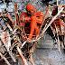 Pemakaman Paling Aneh Yang Mengejutkan Di Dunia
