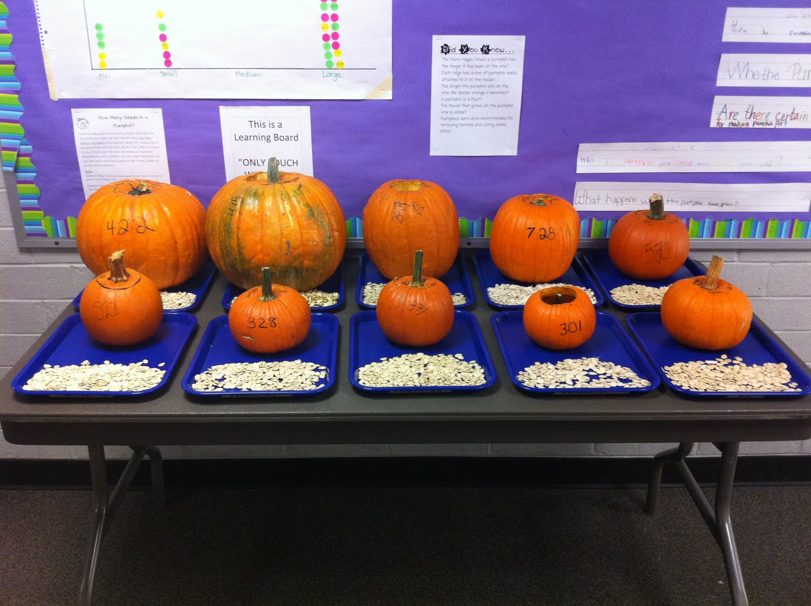 The Teaching Nest How Many Seeds In A Pumpkin