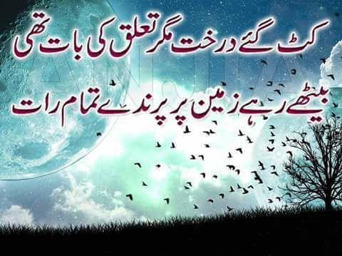 Sad Urdu Shayari ! Kat gaye darakht magar taluq ki bat thi