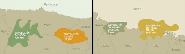 Áreas en las que existen osos en España (mapas: Fundación Oso Pardo).