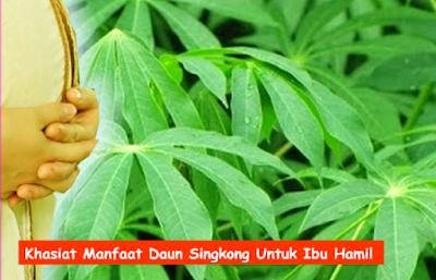 manfaat daun singkong untuk kesehatan