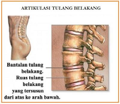 amfiartosis pada sendi tulang belakang