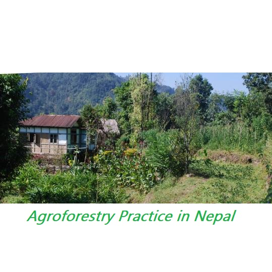 Agroforestry and Food Security Status in Nepal-- Agroforestry practice