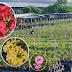 ชวนชมไม้สี สวนสีทอง 3   ผลิตปริมาณและคุณภาพ เจาะทุกตลาด