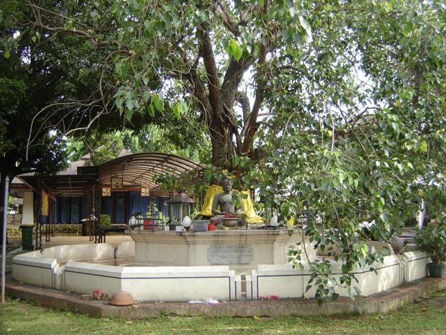 El árbol de la vida y Buda