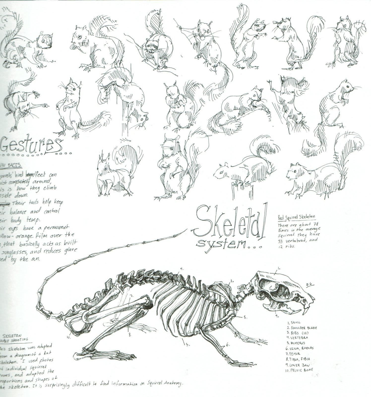 mouse skeletal diagram jet pump miller sketchbook