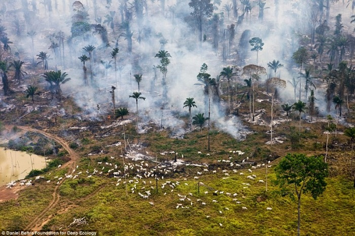 20 Pictures That Prove That Humanity Is In Danger - The rainforest in flames - goats used to graze here