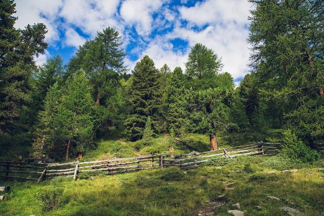 Plattenspitze – Punta delle Laste 3.422m  Bergtour-Martelltal  Wanderung-Martell  Wandern-Südtirol 03