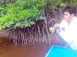 Serunya Mancing Ikan Kerapu Besar Di Rawa Bakau