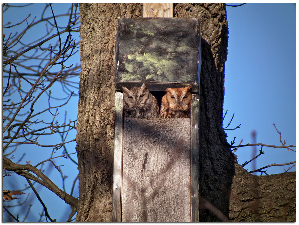Owls Amp Others Of Essex Ma A Different Kind Of Owl Box