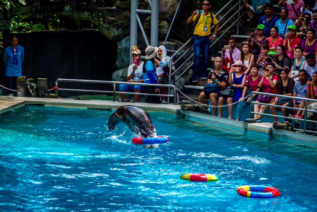 Dolphin Show in the Safari World, Bangkok
