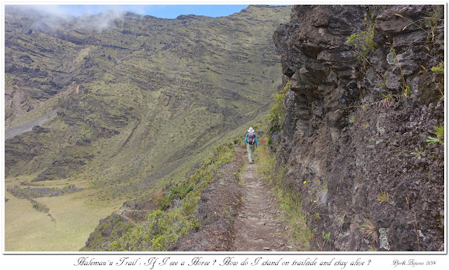 Halemau'u Trail: If I see a Horse? How do I stand on trailside and stay alive?