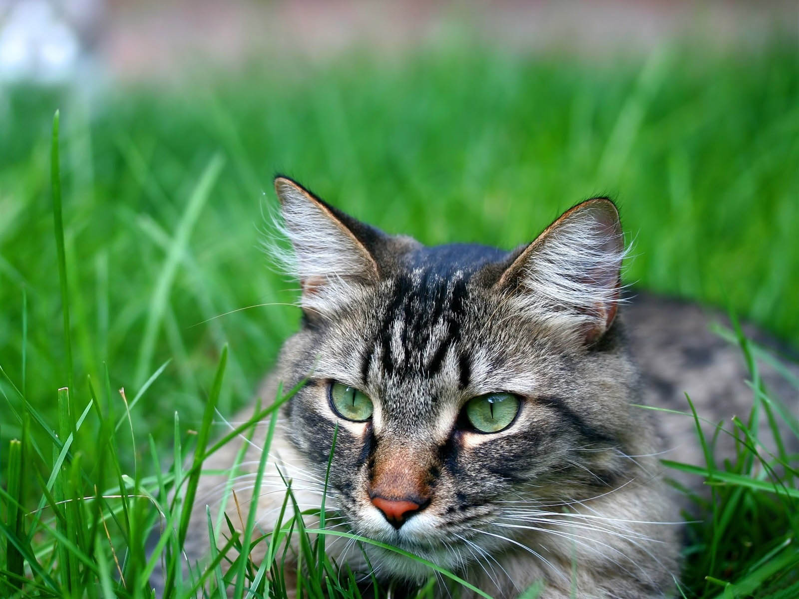 3d Hd Scenery Wallpapers Wallpapers Hunting Cat Wallpapers