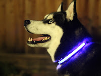 Smart Pet Training System Glow in the Dark Pet Collar