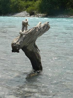Schwemmholz Nessi