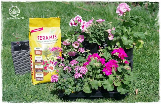 Gartenblog Topfgartenwelt Balkonblumen 2018: Balkonblumen in rosa pink und weiß