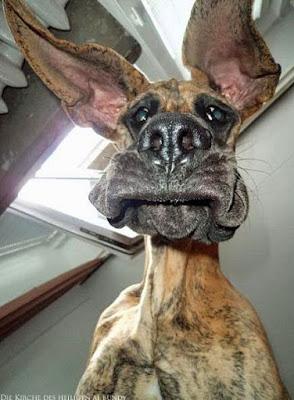 Hässlicher Hundeblick lustig - Wie ich mich am Montag fühle