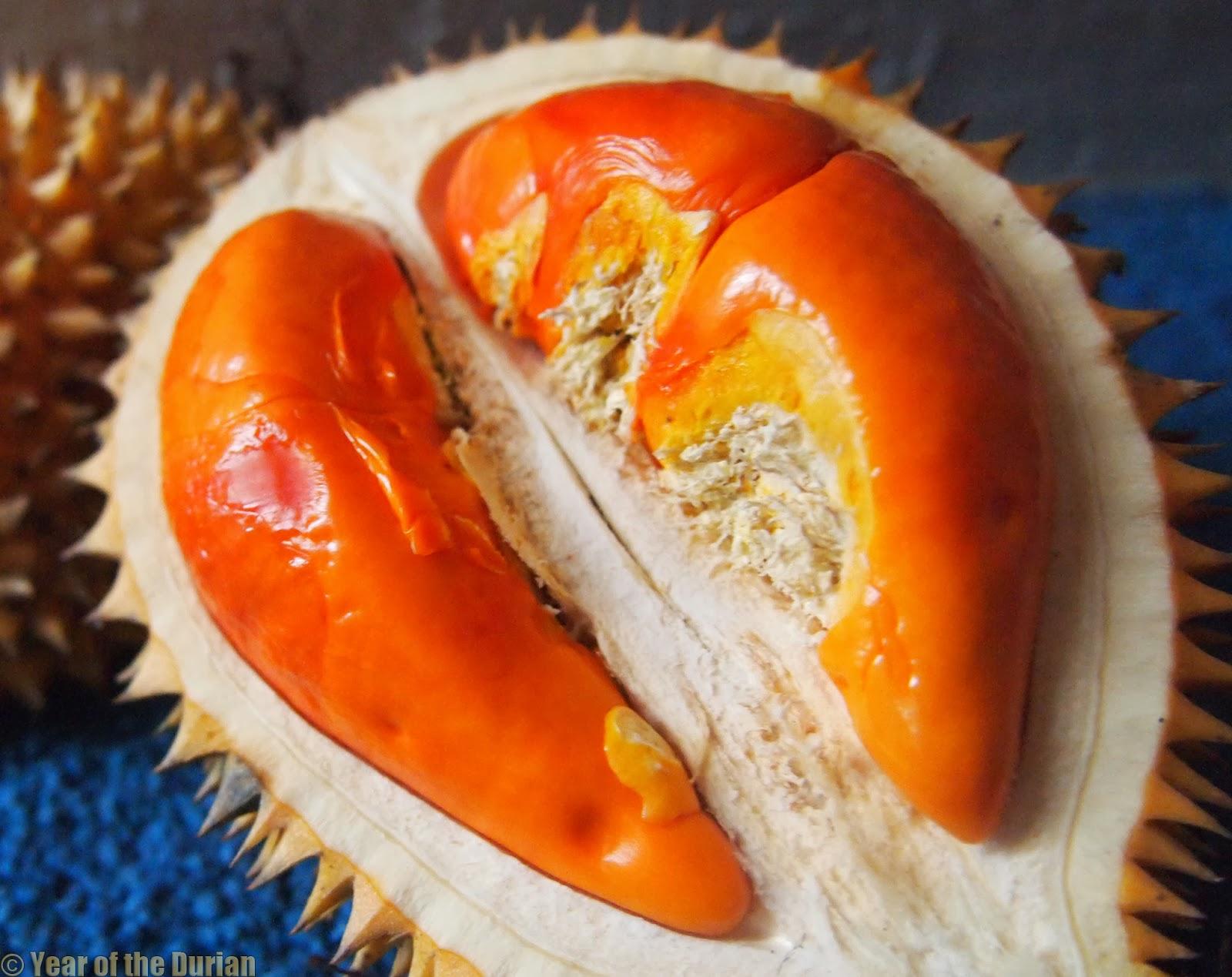 Durian Porn | Kutejensis