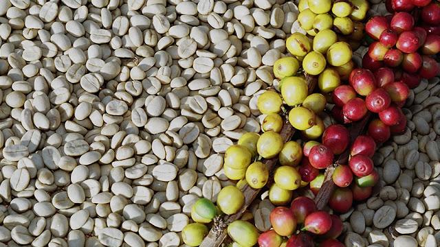 Pesquisa avalia custos na cafeicultura conforme tipo de produção