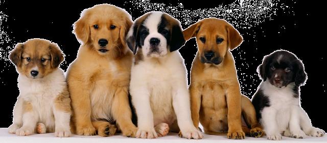 Regalos publicitarios para mascotas