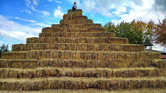 Don't look for the needle in the haystack. Just buy the haystack.