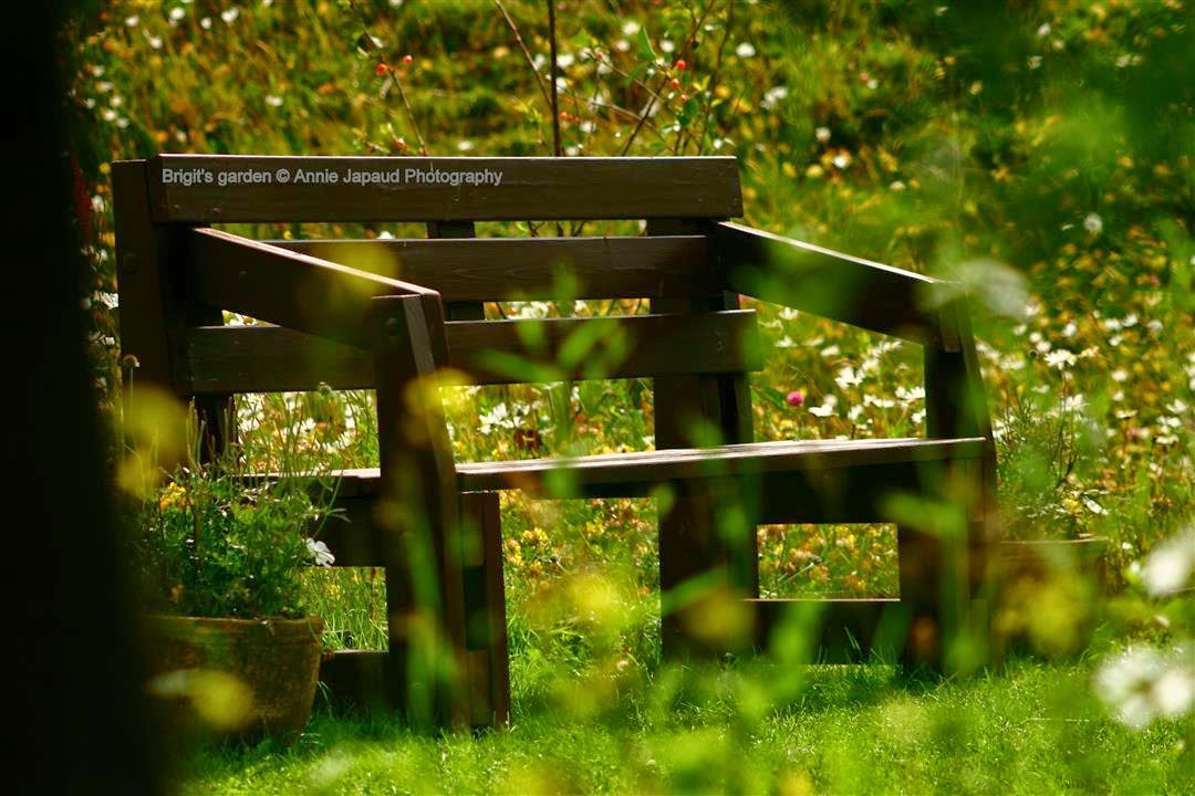 bench in the flowers