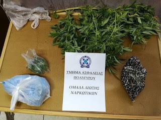 Συνελήφθη 48χρονος για κατοχή και καλλιέργεια κάνναβης στη Χαλκιδική
