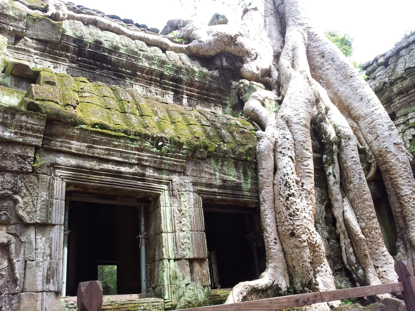 Roots, Angkor Wat