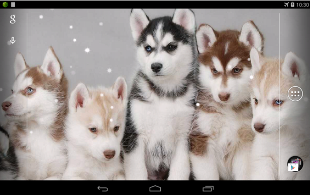 Husky Live Wallpaper for Android app free download