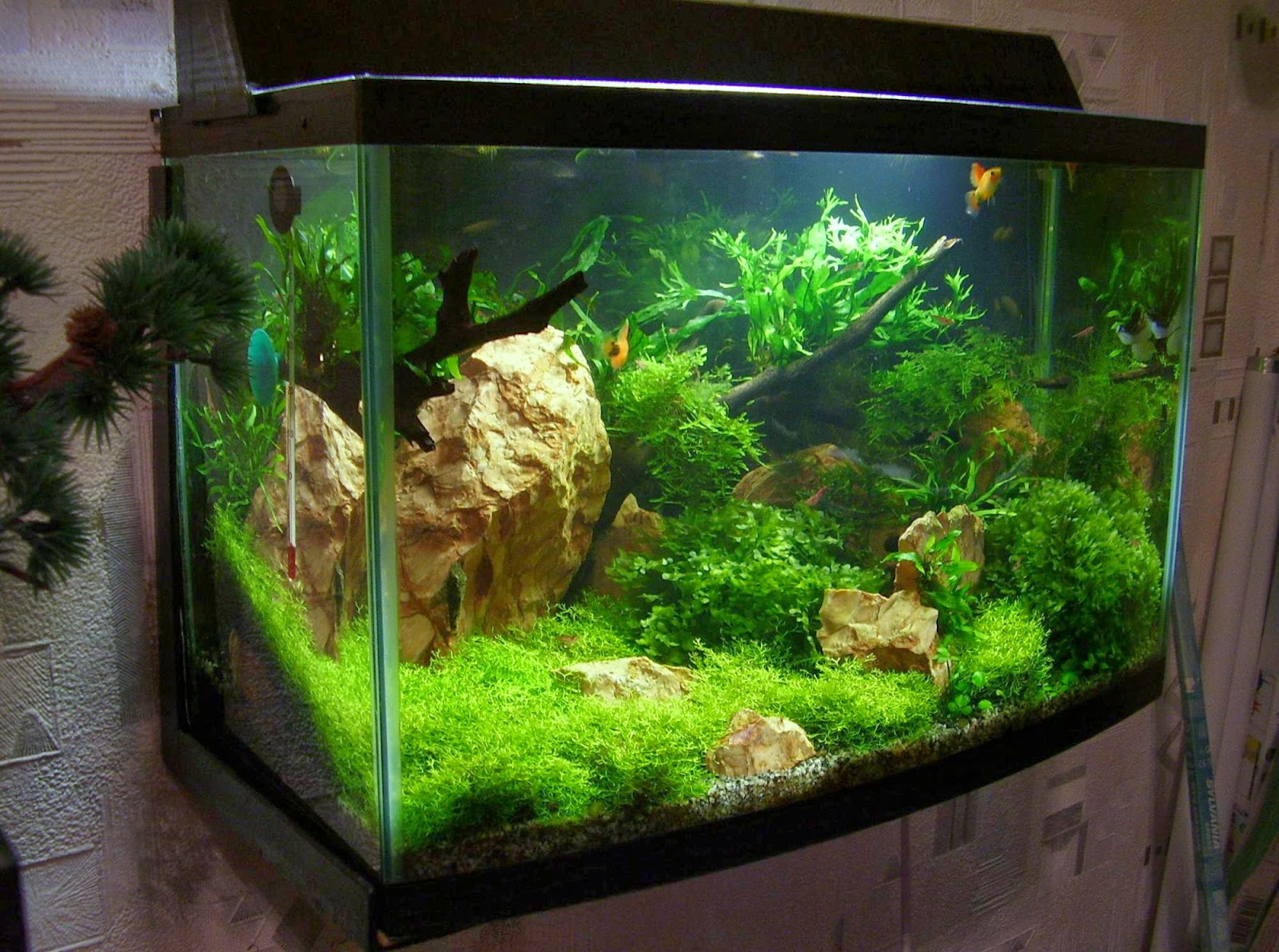 аквариумы фото дизайн 6