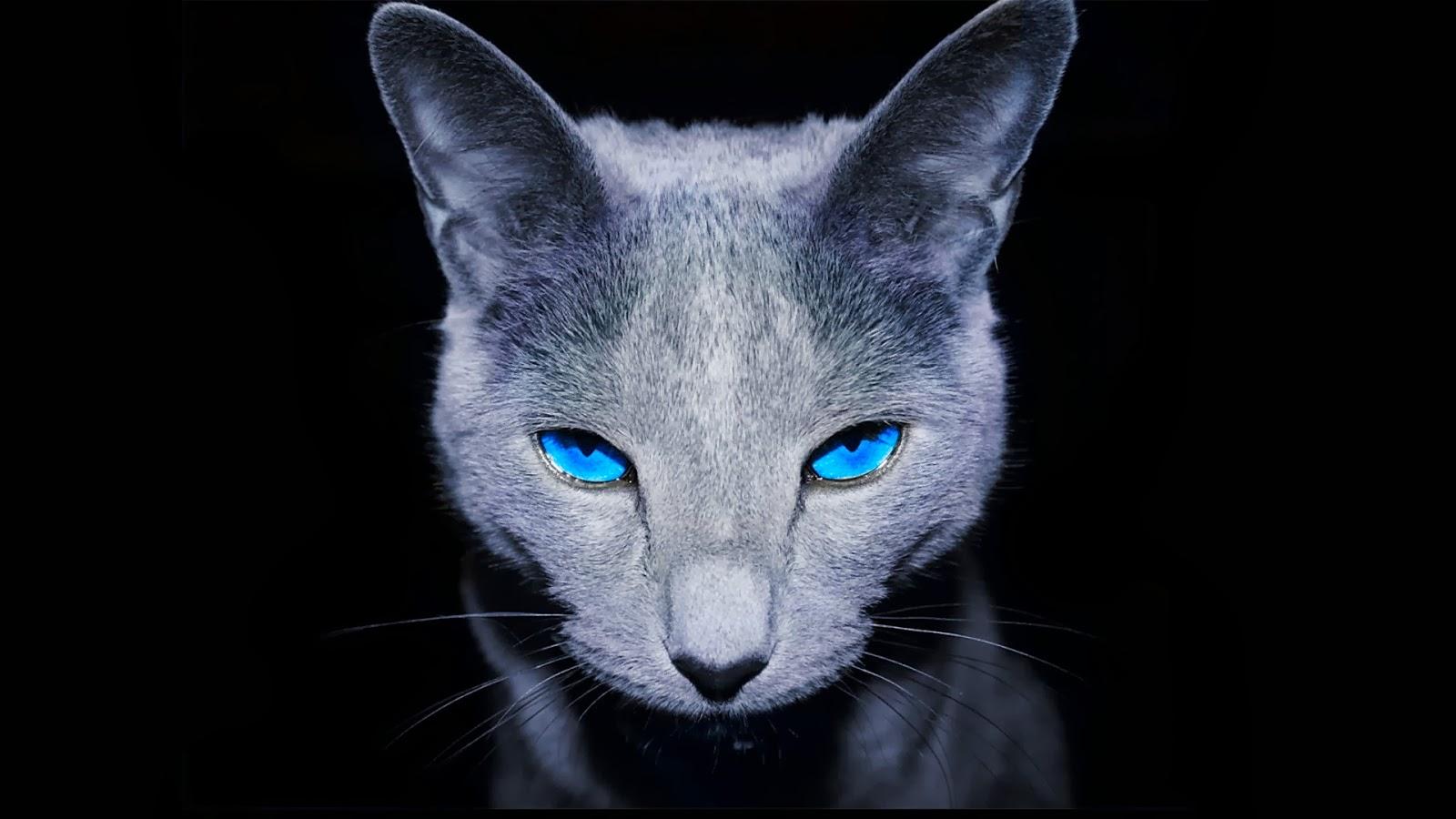 blue eyes wallpaper 2048x1152 - photo #6