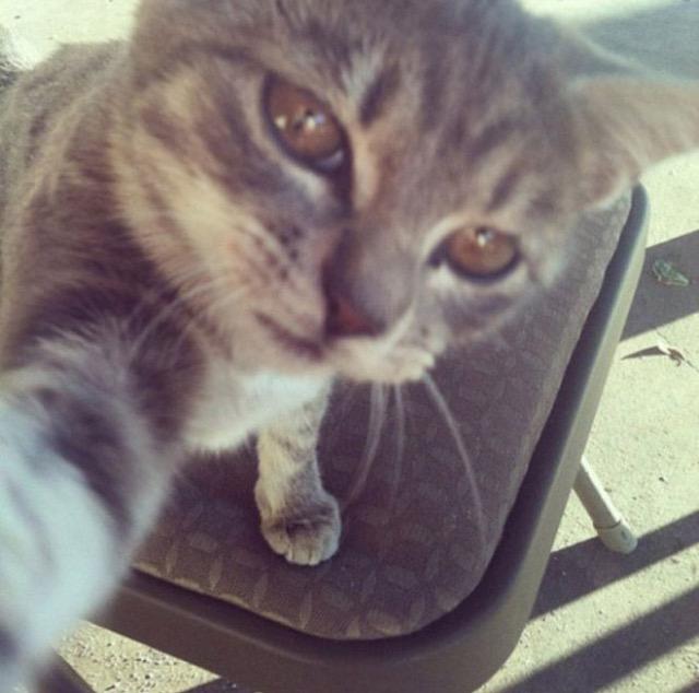 Funny cats - part 240, funny cat images, best cat pic, cute cats