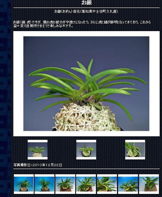 http://www.fuuran.jp/jiman_ogin.html#%E3%81%8A%E9%8A%80%E3%81%AE%E8%A9%B3%E7%B4%B0